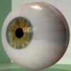 Realistic Human Eye 3D Model