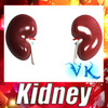 03 47 29 71 kidney preview 0.jpg6b2c8b5c 7df3 46fe b41e 0cf2df2707b8large 4