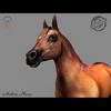 03 49 03 124 arabian horse render02 4