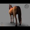 03 49 03 227 arabian horse render03 4