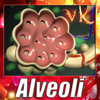 Alveoli Anatomy 3D Model