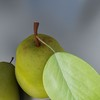 03 58 41 395 pear previews 03.jpgdf07dcd9 3591 4ce8 ab1c 7cd15679b54clarge 4