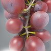 03 59 16 100 red grapes preview 02.jpgcafd1981 33a6 4836 af31 534997bcf8d8large 4