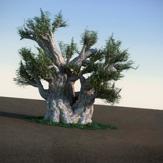 African Baobab HiPoly tree 3D Model