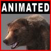 04 02 58 606 bear closeup 001 4
