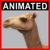 04 02 58 863 camel closeup 001 4