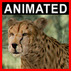 04 02 58 986 cheetah closeup 001 4