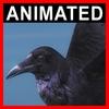 04 02 59 138 crow closeup 001 4