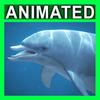 04 02 59 377 dolphin closeup 001 4