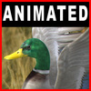 04 02 59 631 ducks closeup 001 4