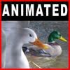 04 02 59 744 ducks closeup 002 4