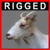04 03 00 520 goat closeup 003 4