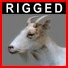 04 03 00 719 goat closeup 003 4