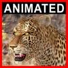 04 03 01 208 leopard closeup 001 4