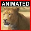 04 03 01 377 lioness closeup 001 4
