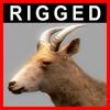 04 03 01 461 goat closeup 001 4
