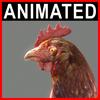 04 03 01 80 hen closeup 001 4