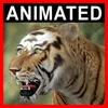 04 03 03 652 tiger closeup 001 4