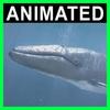 04 03 04 837 whale closeup 001 4
