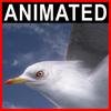 04 03 05 269 seagull closeup 001 4