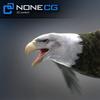04 06 21 656 eagle bald 01 4