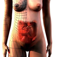 Pregnant Woman and Fetus 3D Model