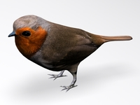 European Robin 3D Model