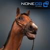 04 17 56 753 horse 14 4