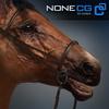 04 17 58 166 horse 03 4