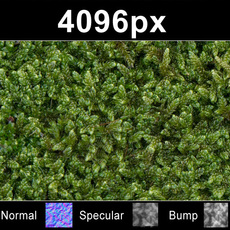 Moss 01 - High Res Set