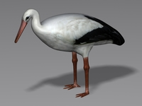Stork 3D Model