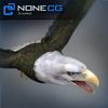 04 20 52 262 eagle bald 00 4