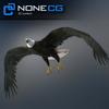 04 20 52 472 eagle bald 02 4
