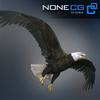 04 20 52 608 eagle bald 03 4