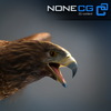 04 20 53 271 eagle golden 00 4