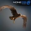 04 20 53 397 eagle golden 01 4
