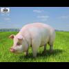 04 28 58 440 pig 480 0001 4