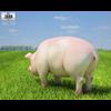 04 28 58 648 pig 480 0003 4