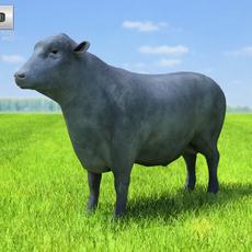 Angus Bull 3D Model