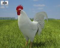 Rooster Leghorn 3D Model