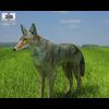 04 29 00 638 coyote 480 0001 4