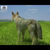 04 29 00 915 coyote 480 0003 4