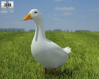Pekin Duck 3D Model