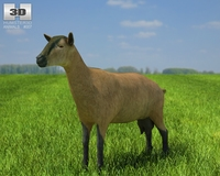 Alpine Goat (she-goat) 3D Model