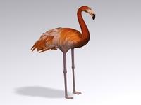 Flamingo 3D Model