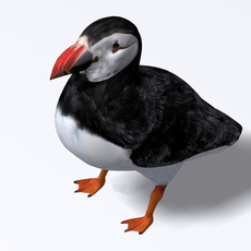 Puffin 3D Model