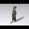 04 30 15 969 meerkat5 4
