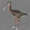 04 30 47 152 ibis wire 4