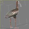 04 30 47 222 ibis wire2 4
