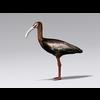 04 30 47 372 ibis2 4